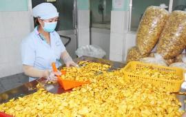 Bạn cần cơ hội trong ngành chế biến thực phẩm? Chọn ngay máy sấy Anpha!